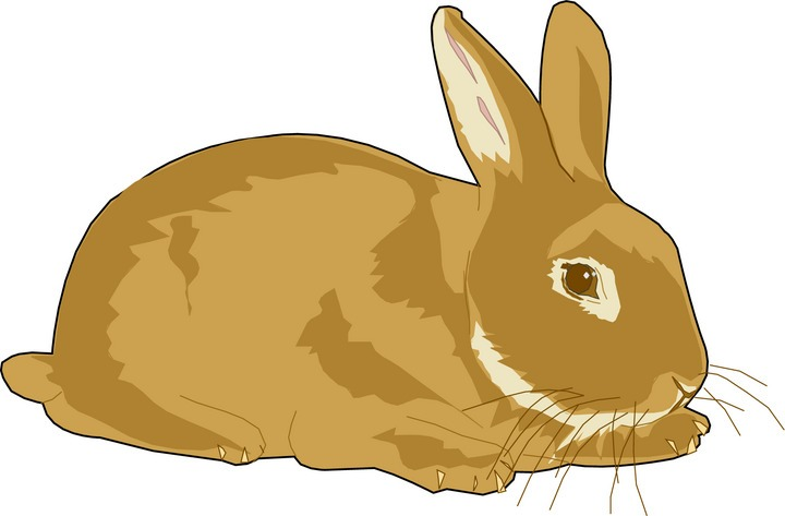 Rabbit clipart free clipart .