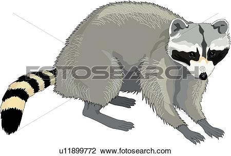 Raccoon. ValueClips Clip Art - Raccoon Clip Art