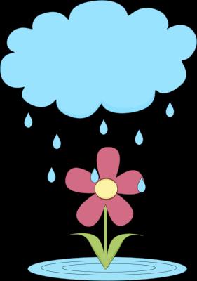 Rain Cloud Over a Flower
