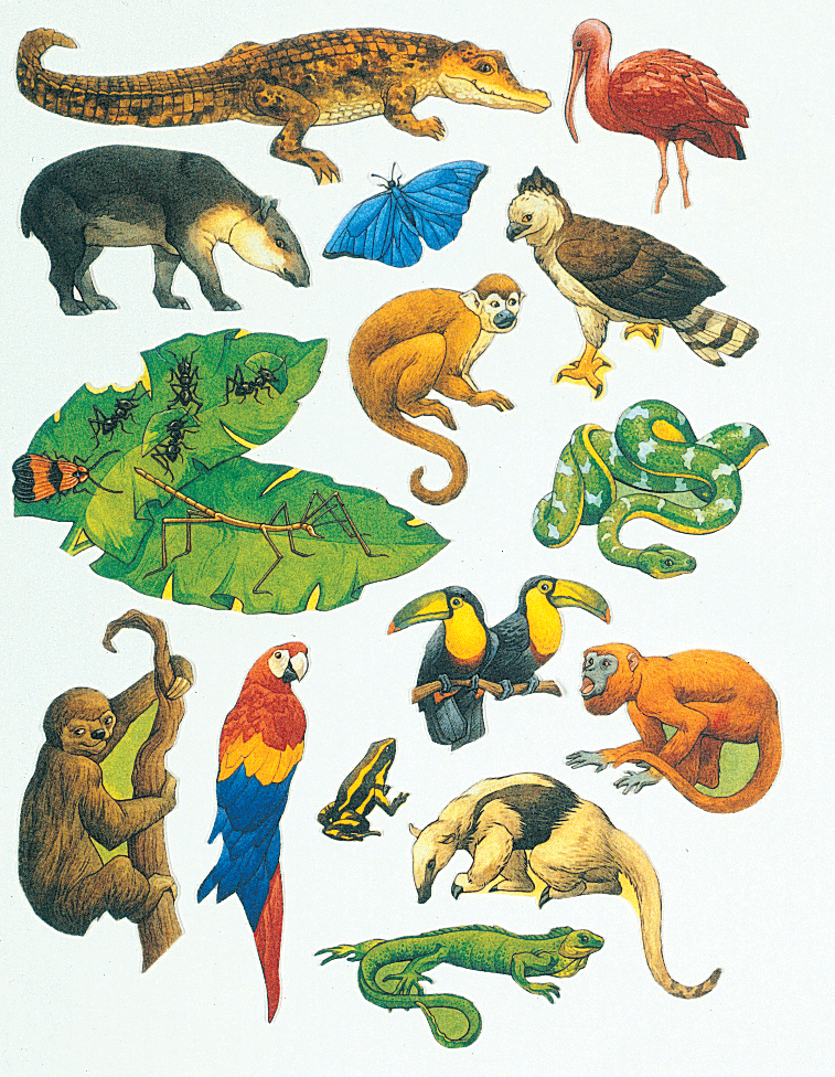 Rainforest Animals Clip Art-Rainforest Animals Clip Art-9