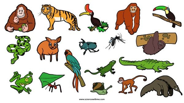 Rainforest Animals For Kids .-Rainforest Animals For Kids .-11