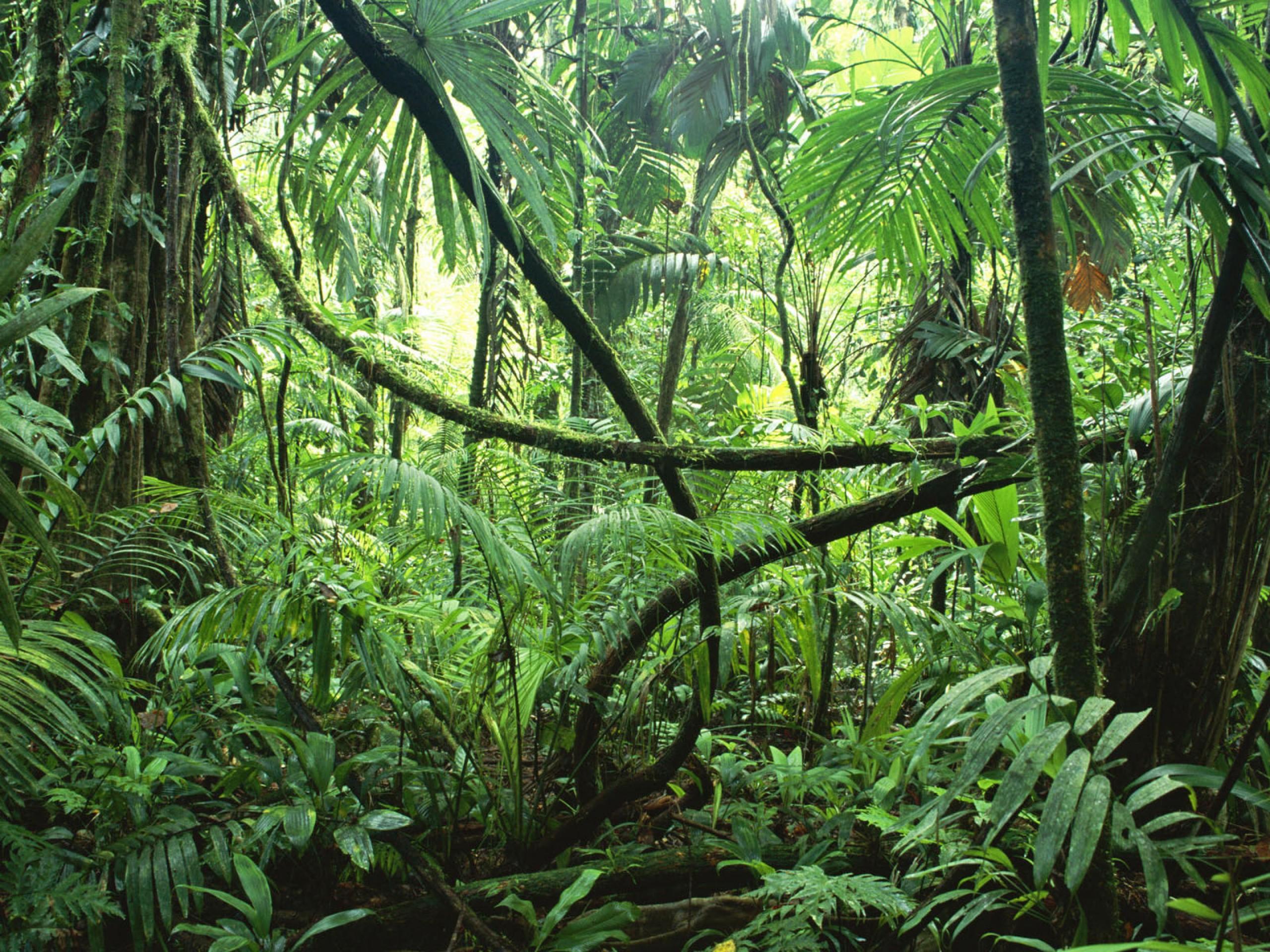 Rainforest clipart wallpaper
