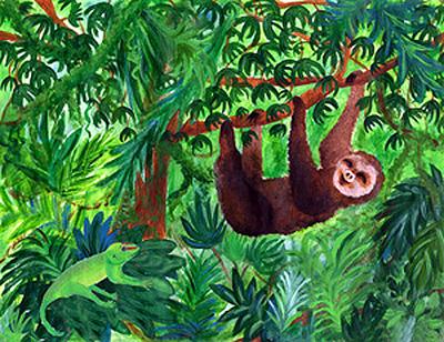 Rainforest Cliparts-Rainforest cliparts-13