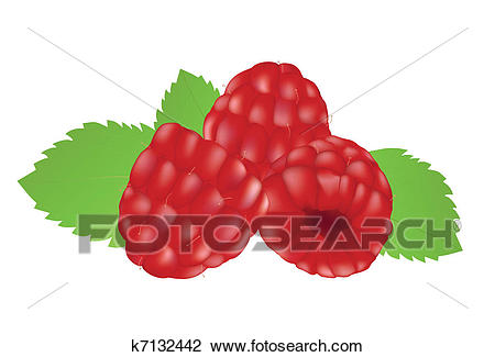 Clipart - Raspberries on the white background. Fotosearch - Search Clip Art,  Illustration Murals