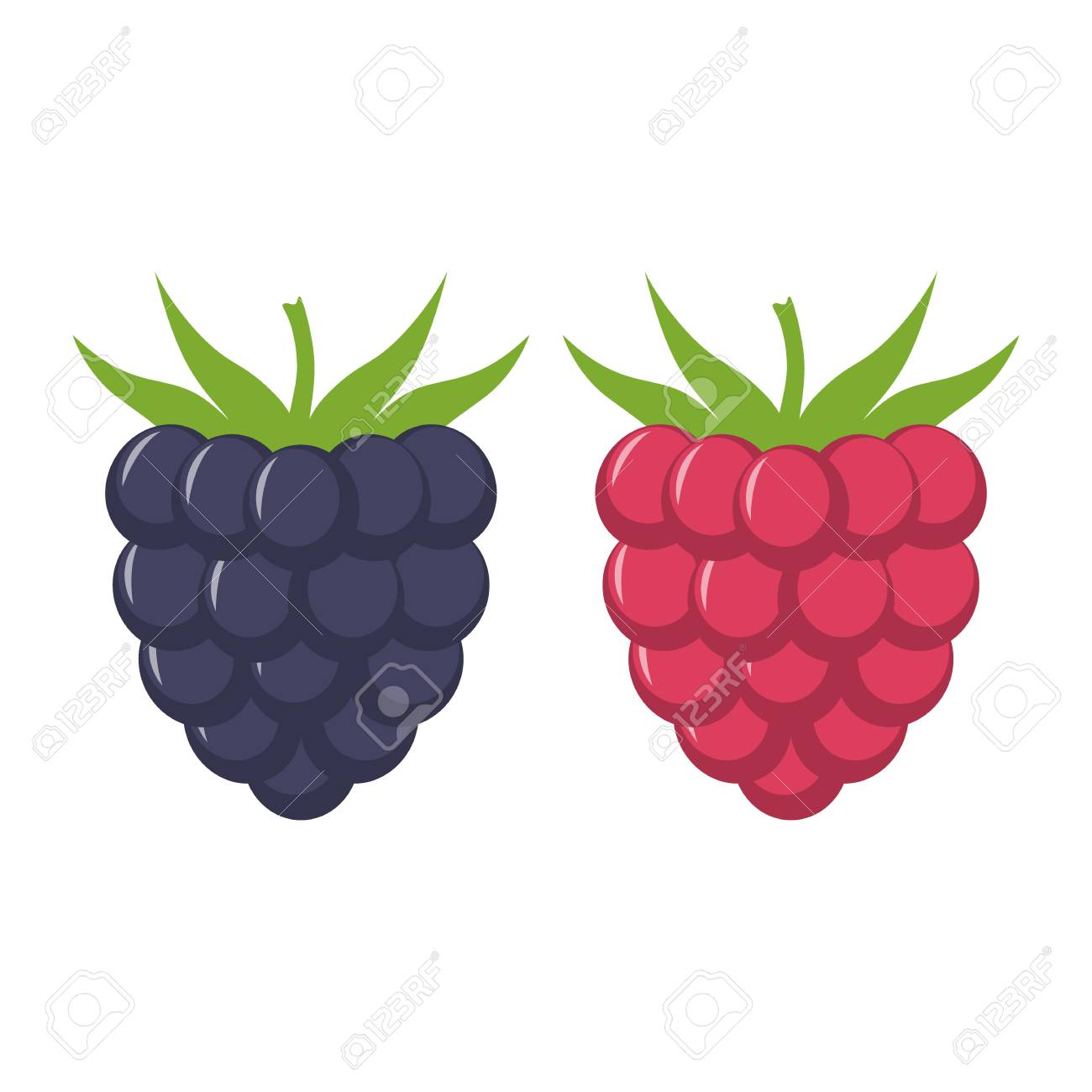 Blackberry and raspberry with leaves vector icon. Blackberry and raspberry  icon clipart. Blackberry and
