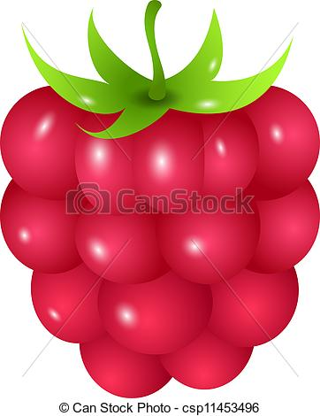 Raspberry - csp11453496