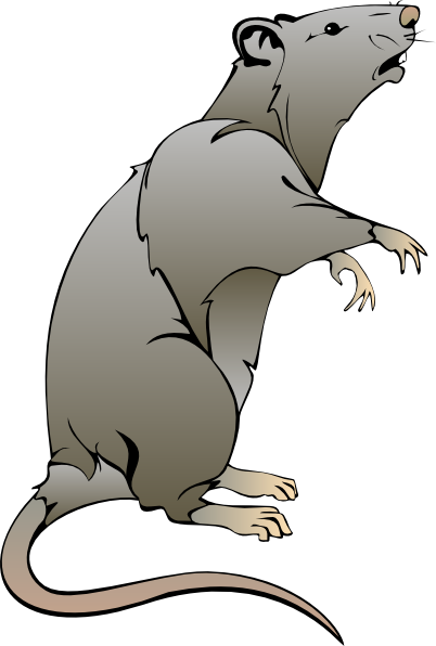 rat clipart