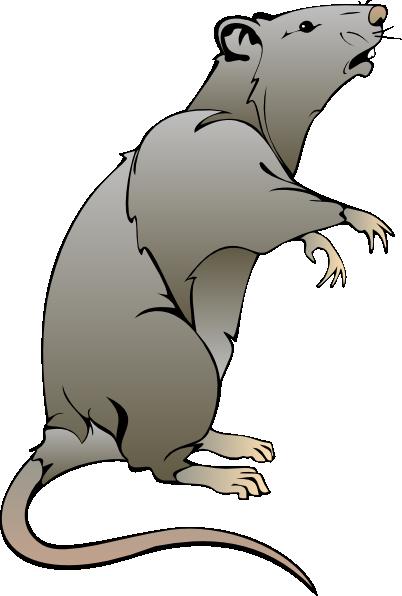 Rat Clipart-rat clipart-7