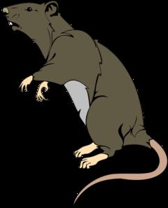 Rat Clipart. Rat-Rat Clipart. Rat-6