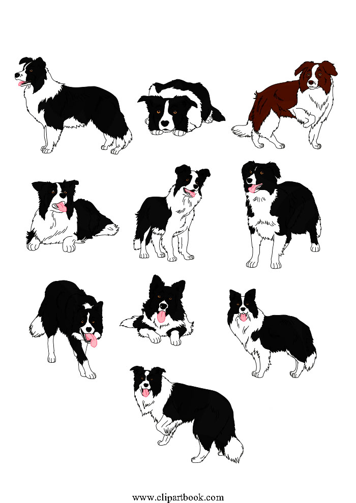 Realistic Border Collie dogs