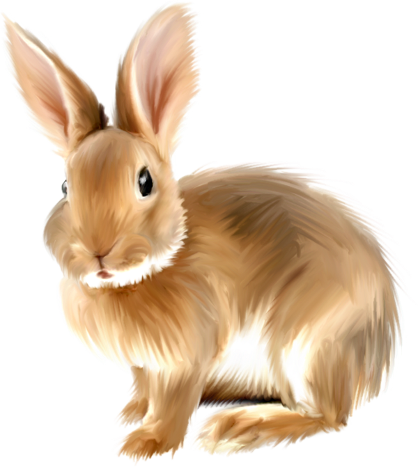 Realistic rabbit clipart