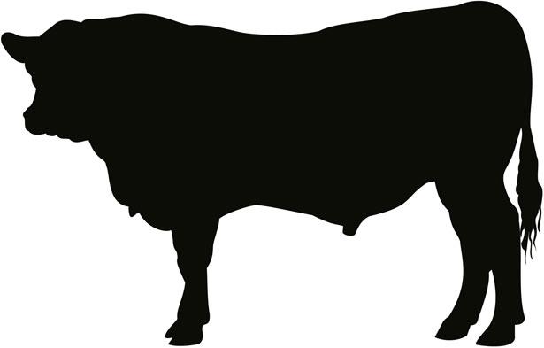 Red Angus Bull Clipart #1-Red Angus Bull Clipart #1-18