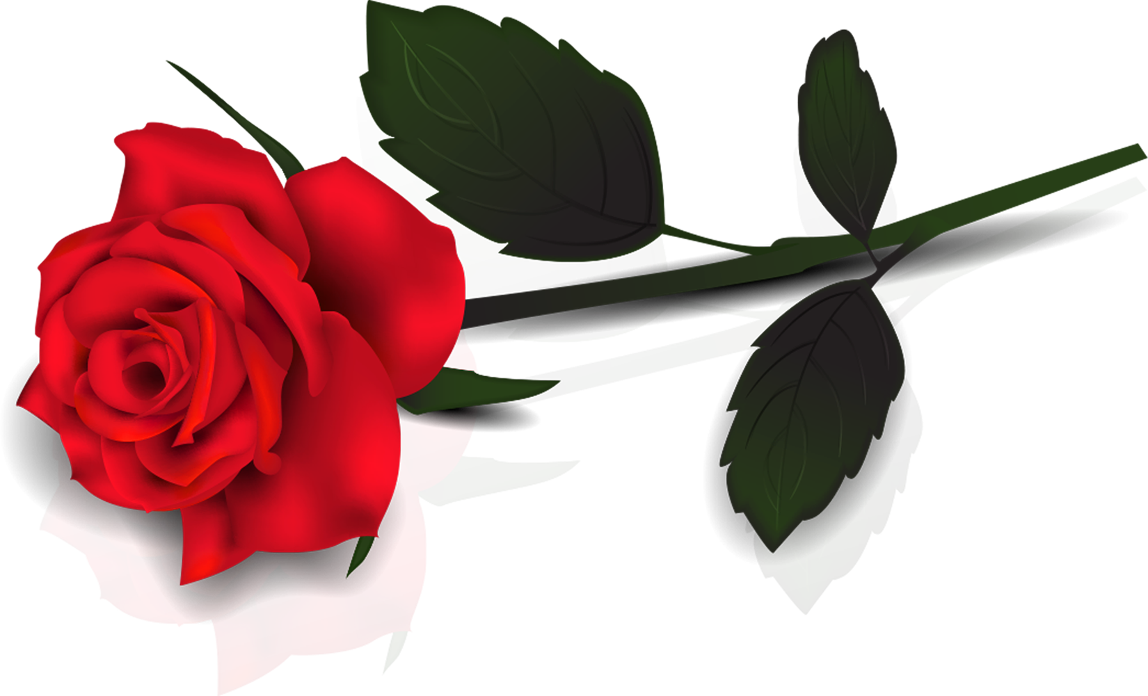Red Rose Clipart-Red Rose Clipart-15