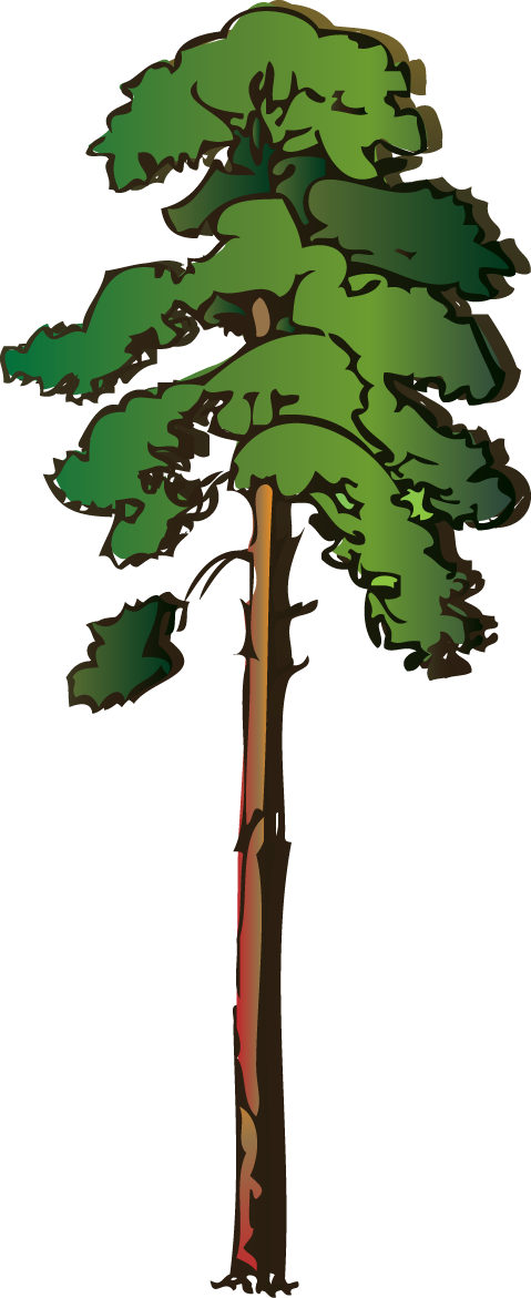Redwood Tree Clipart ...