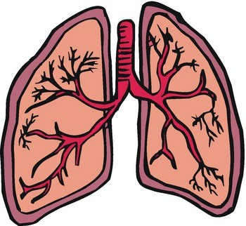 ... Respiratory System Clipart ...