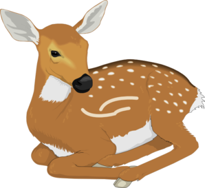 Resting Baby Deer Clip Art-Resting Baby Deer Clip Art-15