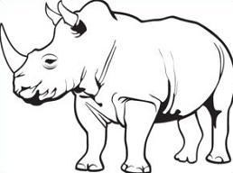 Rhinoceros-Rhinoceros-17