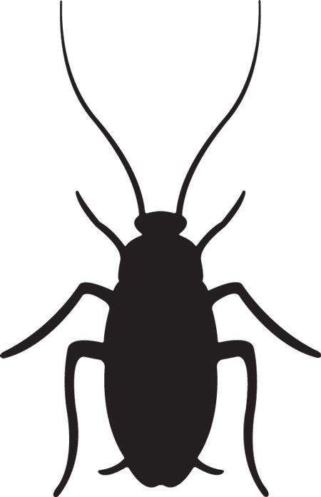 Roach Clip Art