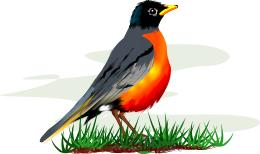 Robin Clip Art Free-Robin Clip Art Free-8