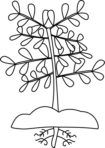 Root Clipart-root clipart-15