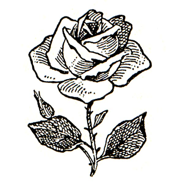 rose clipart black and white - Rose Clipart Black And White