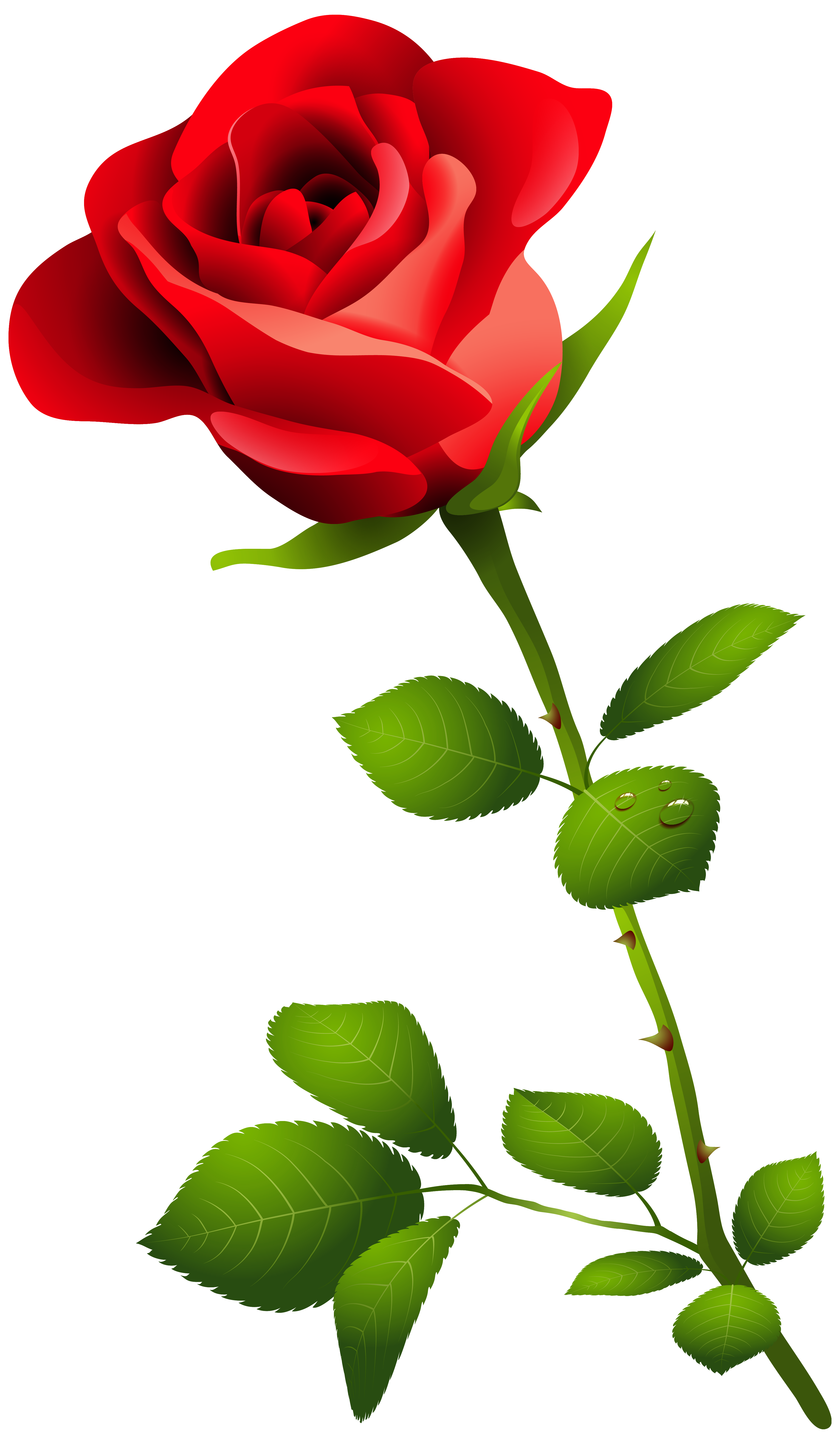 Clip Art Pink Rose Pink Rose With-Clip Art Pink Rose pink rose with-1