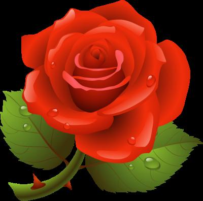 Rose Clipart U0026middot; Wrinkle Clipar-Rose Clipart u0026middot; wrinkle clipart-16