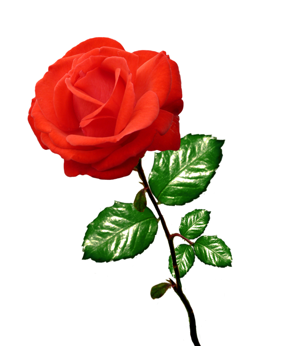 Red Rose Clipart Long Stalk ClipartLook.-red rose clipart long stalk ClipartLook.com -5