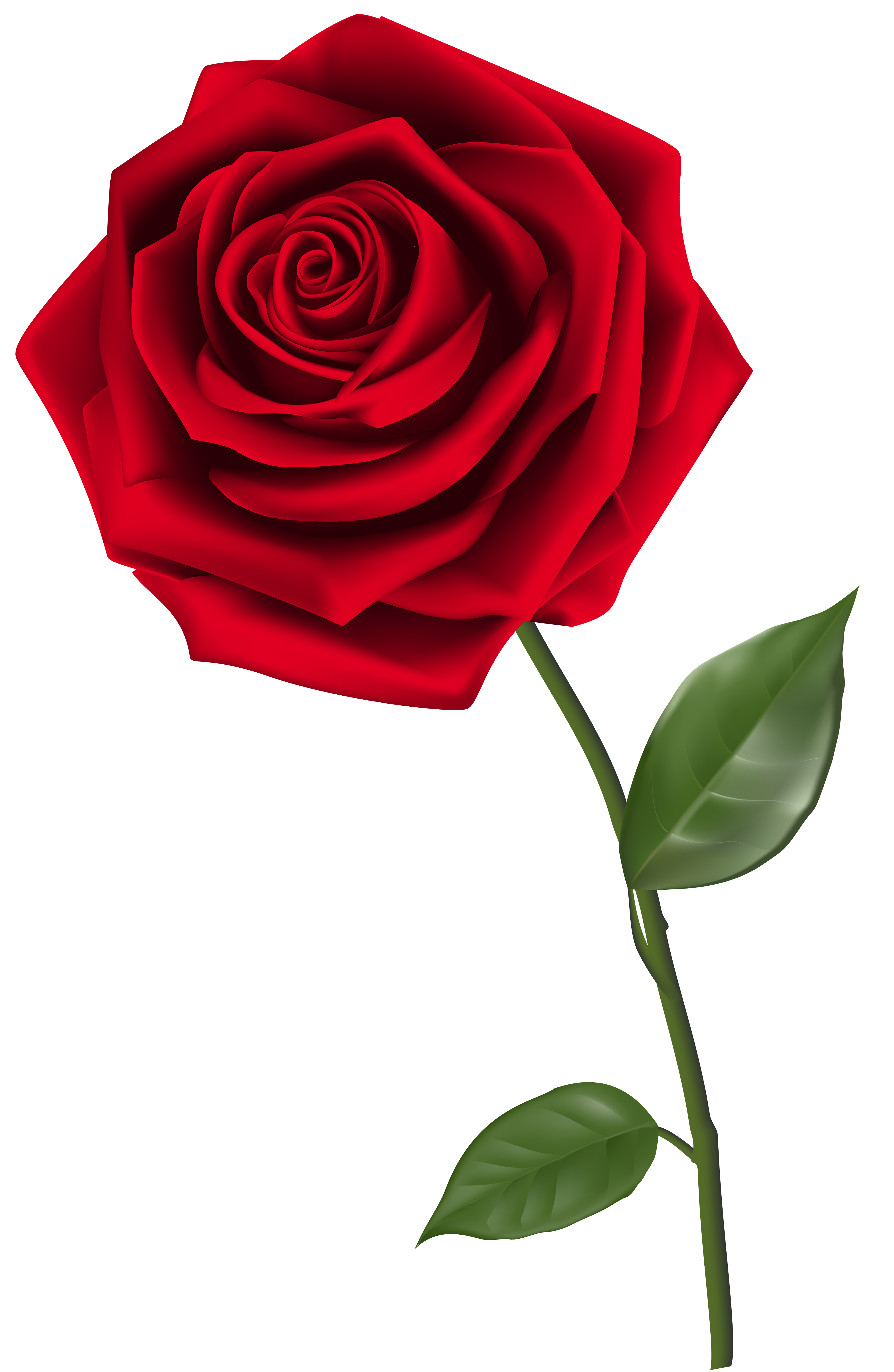 Single Red Rose PNG Clipart Image-Single Red Rose PNG Clipart Image-10