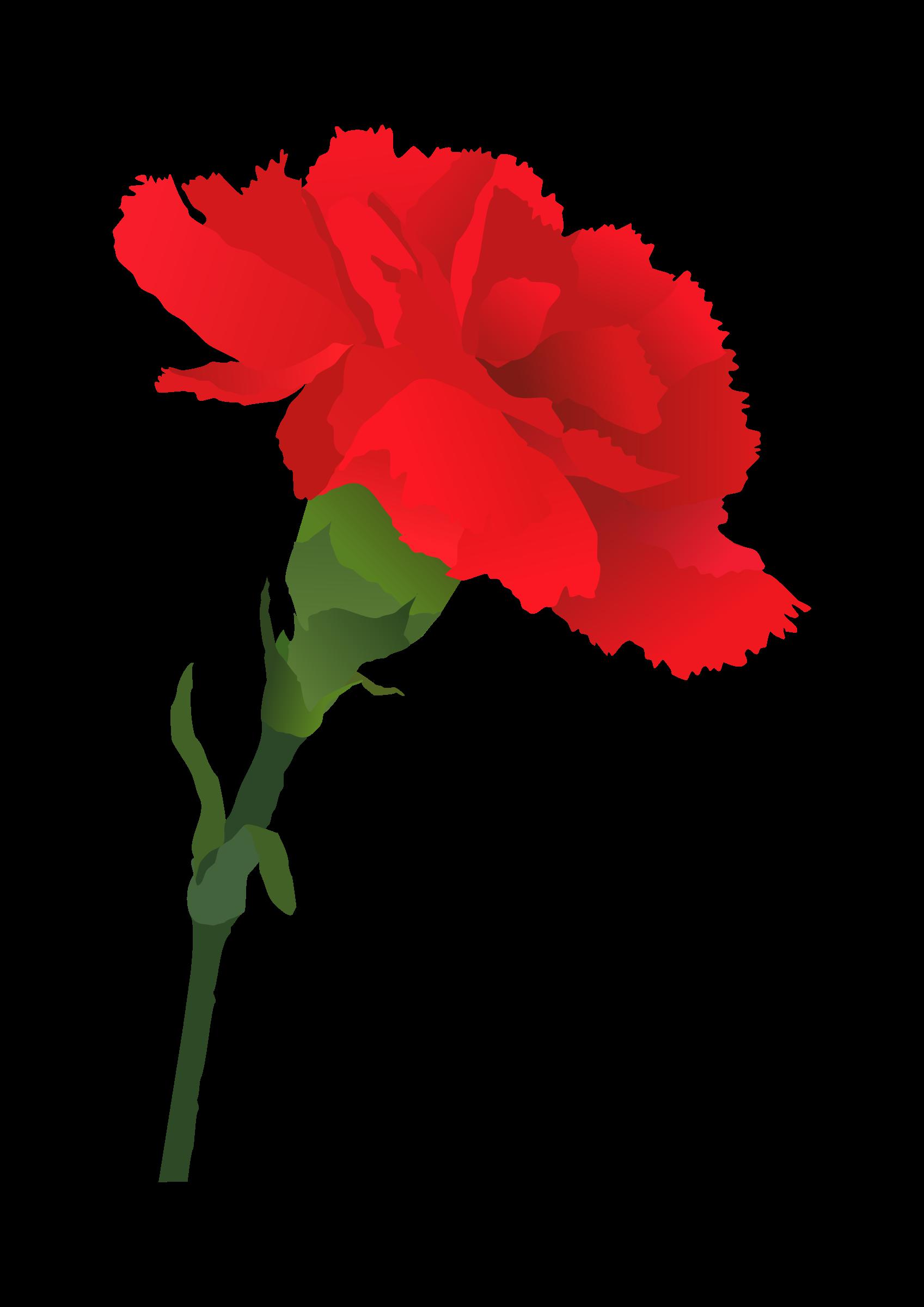 rose vector clipart. - Carnation Clip Art
