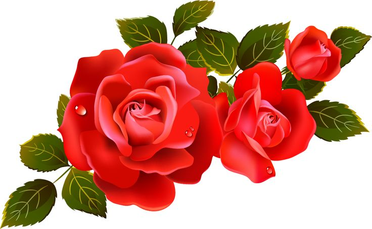 Roses on clip art red roses . - Red Roses Clipart