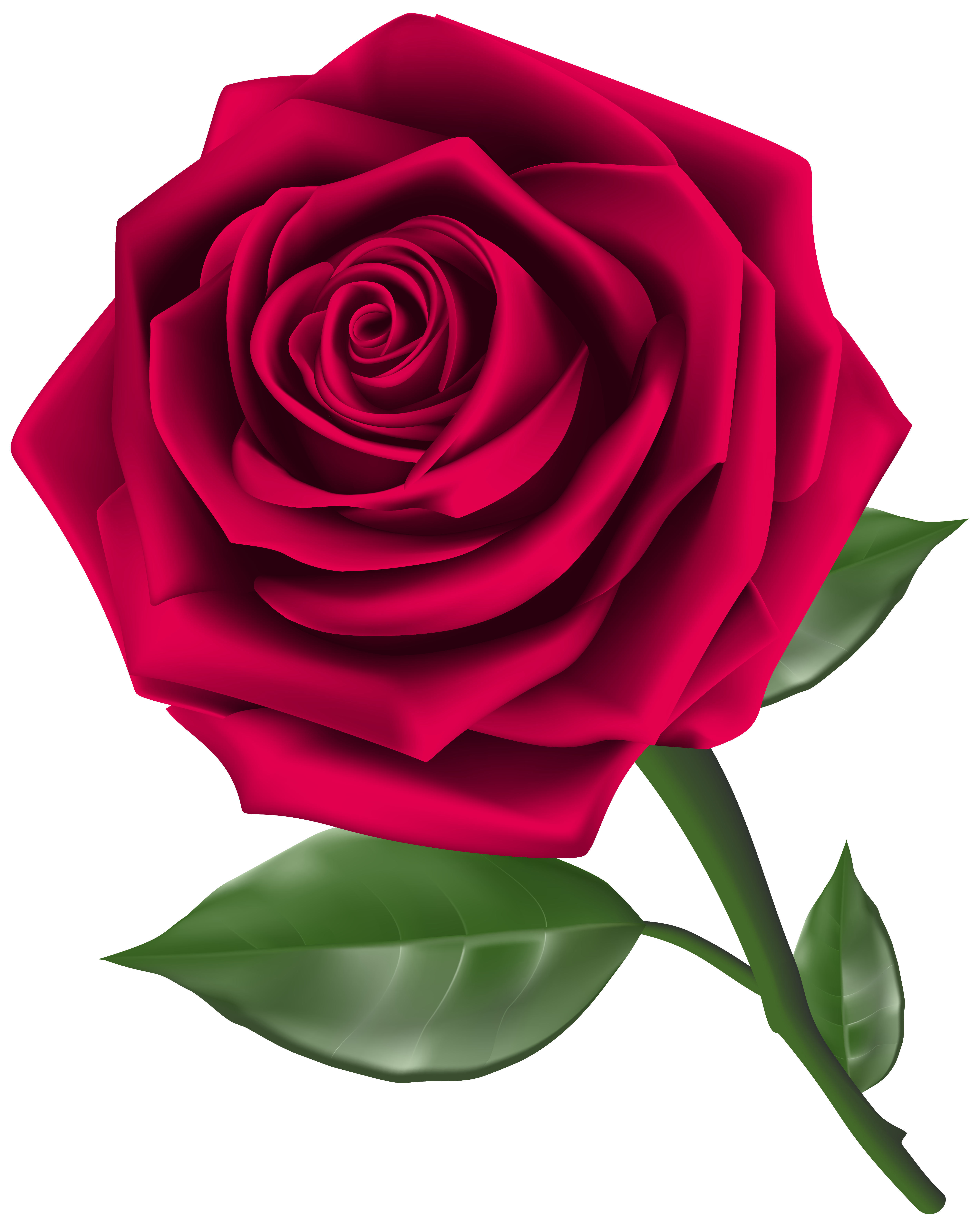 Roses steam rose clipart image