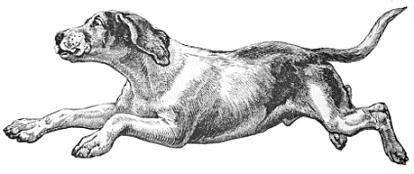 Running Hound Dog-running hound dog-13