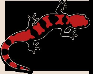 salamander clip art #63