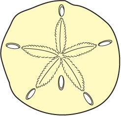 Sand Dollar Clip Art