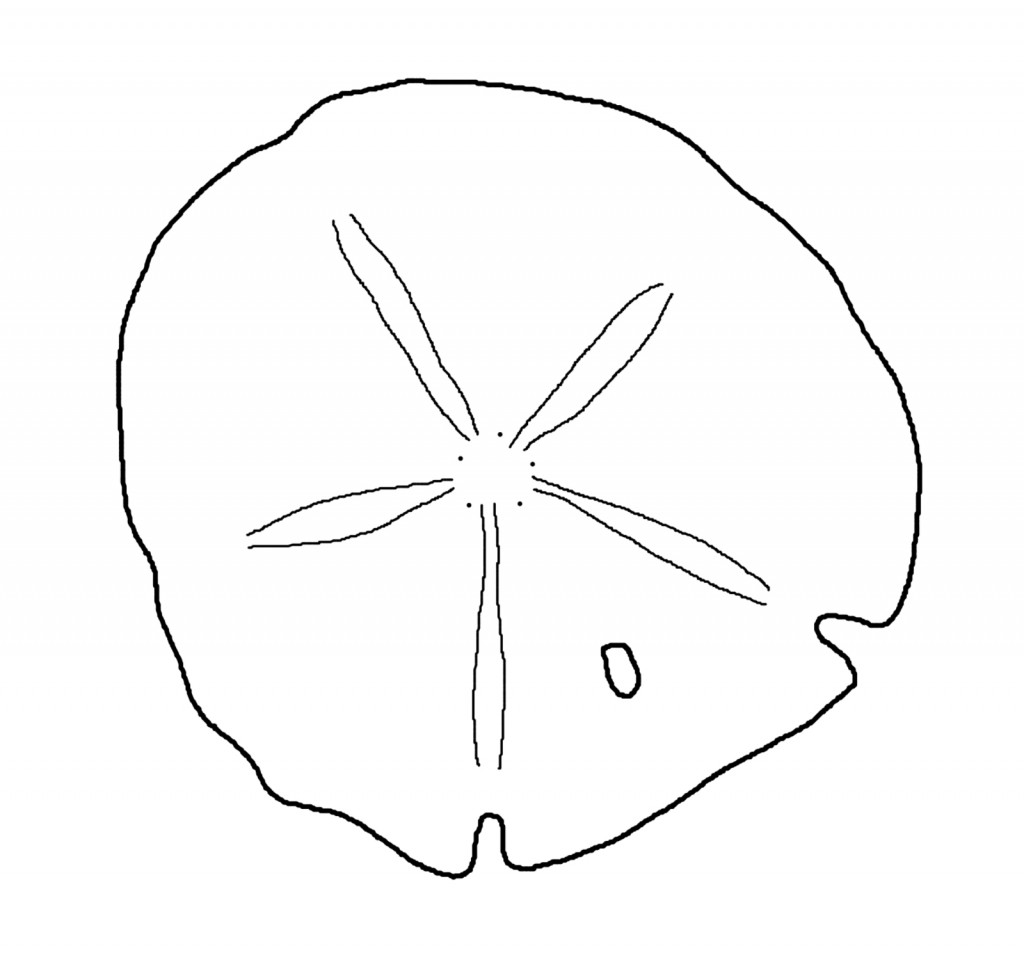 Sand Dollar Outline u0026middot; « More Sand Dollar Clip Art