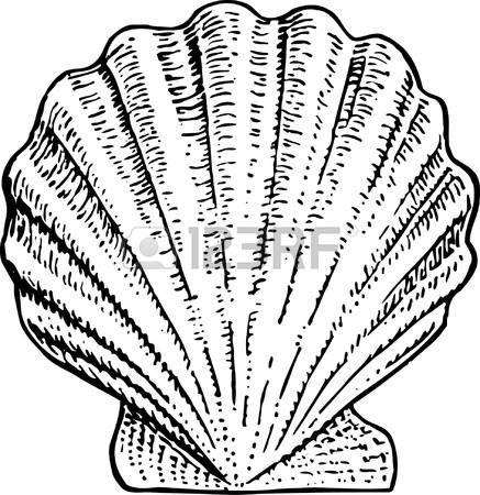 scallop shell: Seashell Illustration