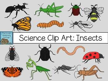 Science Clip Art: Insects {Personal u002-Science Clip Art: Insects {Personal u0026amp; Commercial ...-18