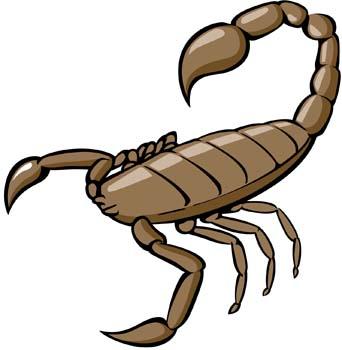 Scorpion vector free vectors download 4vector clipart