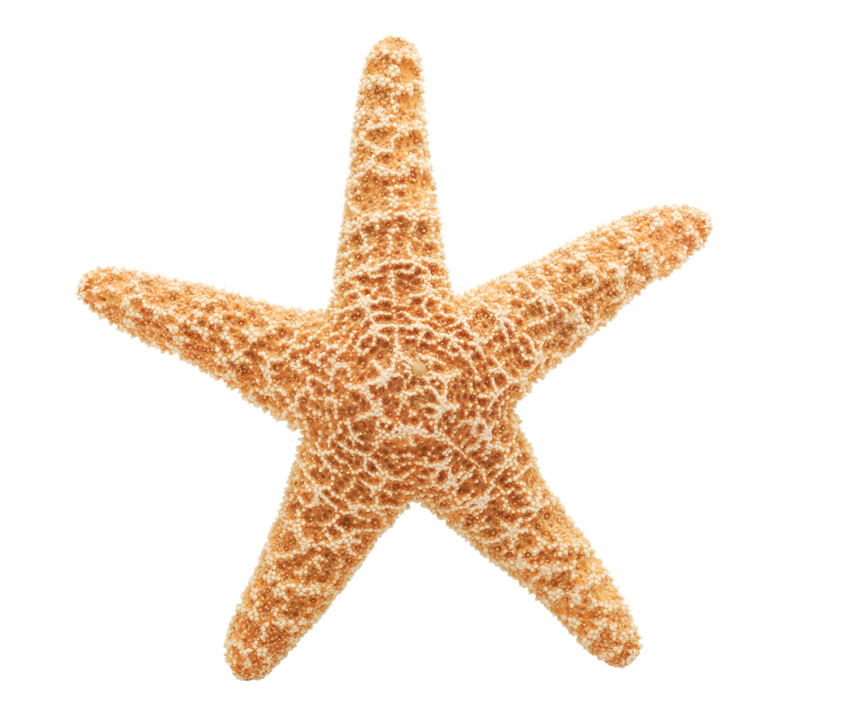 Sea Starfish Clipart