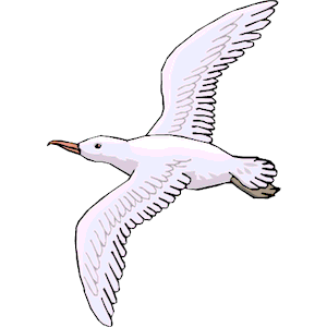 Seagull clipart cliparts of .