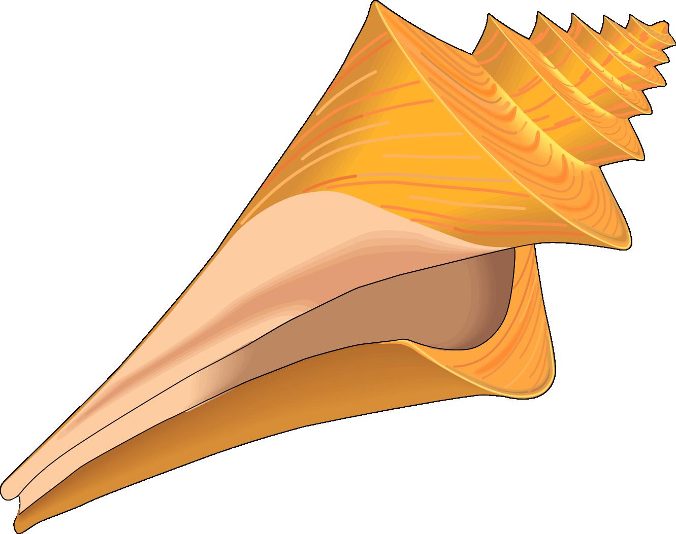 Seashell Clip Art - Clipart library