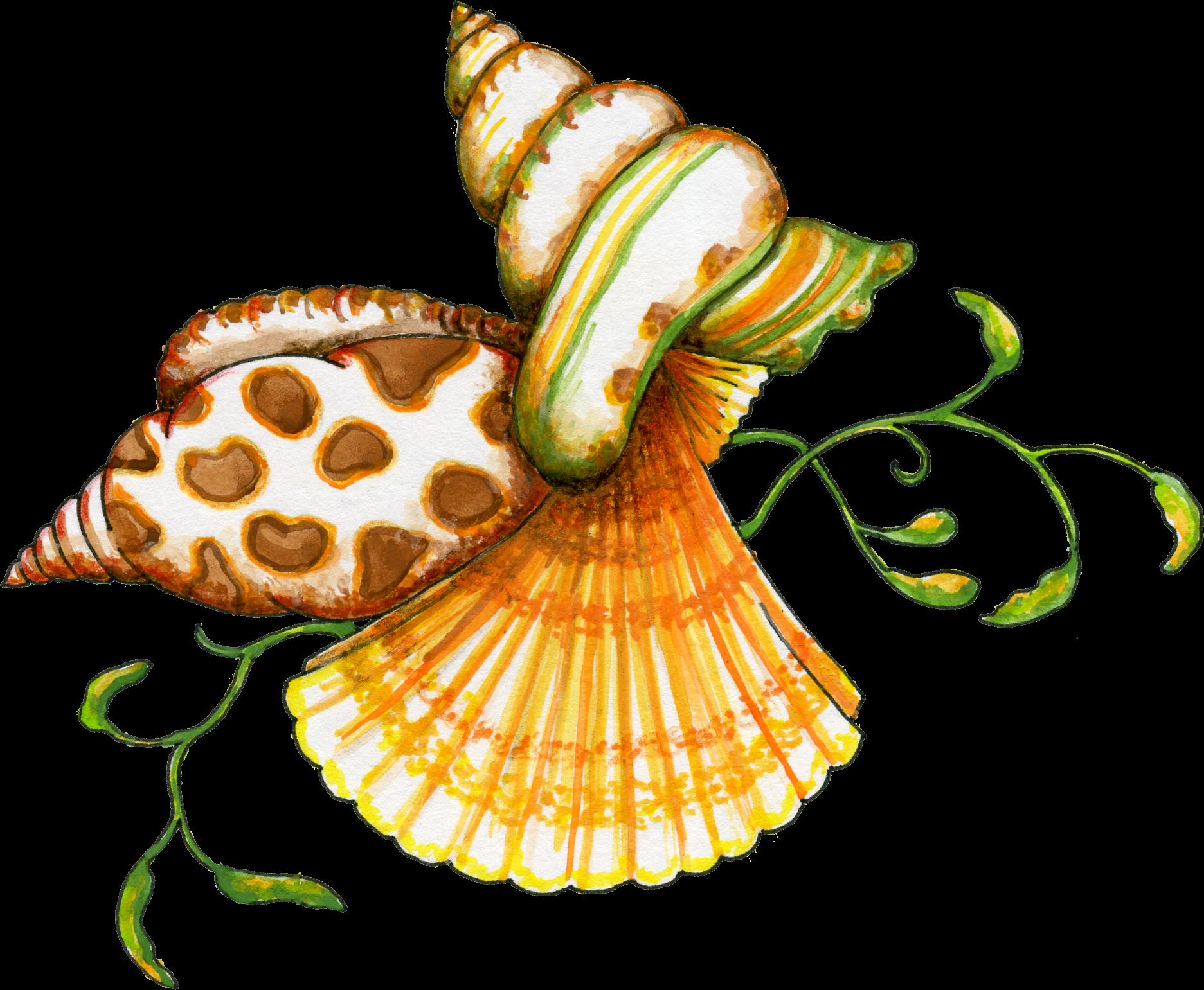 Seashell Clipart-seashell clipart-14