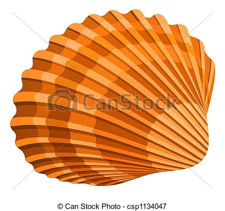 ... Seashell - illustration of seshell isolated on white