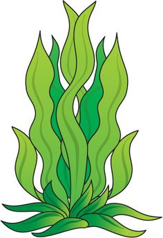 seaweed clipart