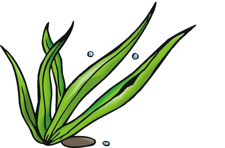 Seaweed, Cartoon and To draw ...