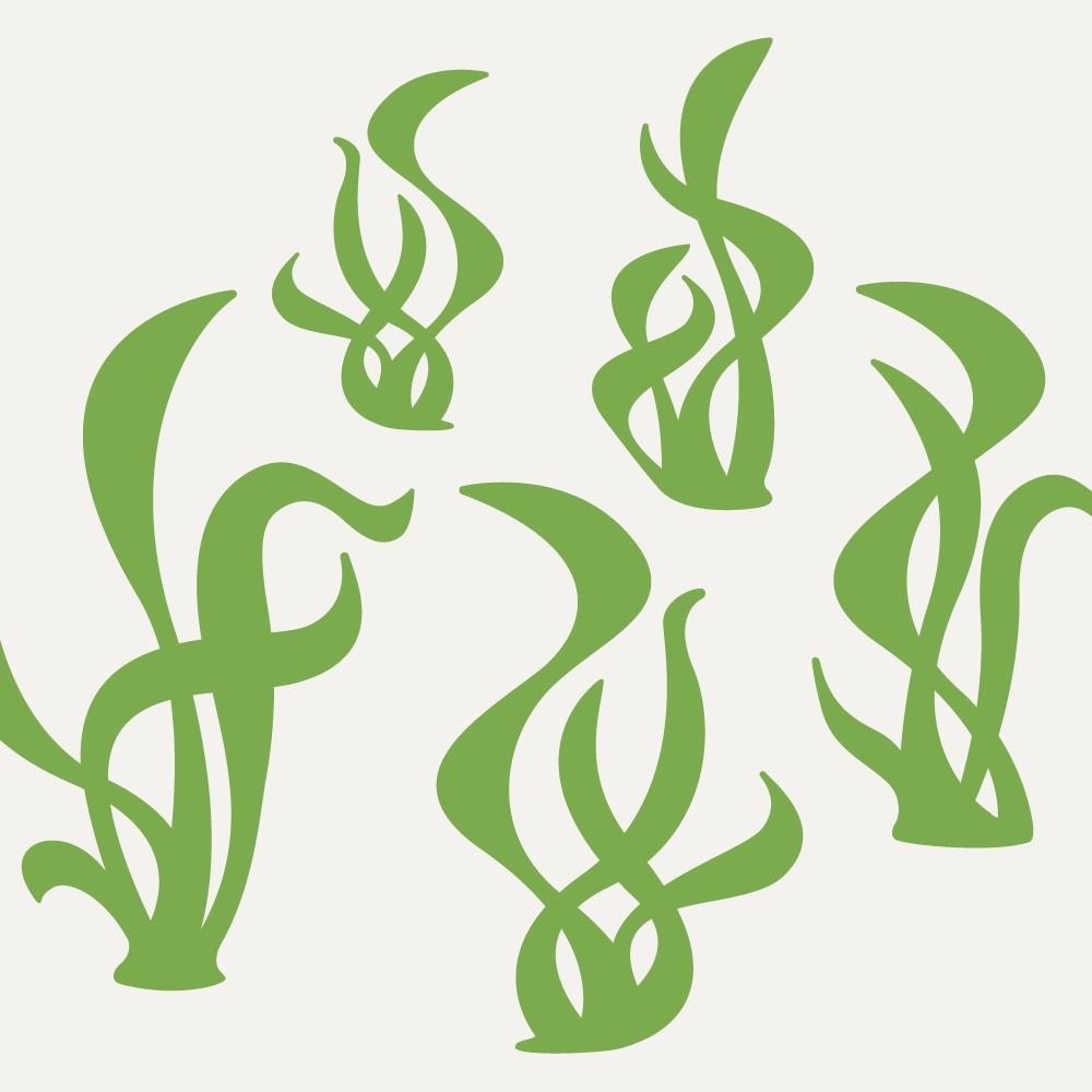Seaweed Clip Art-Seaweed Clip Art-10