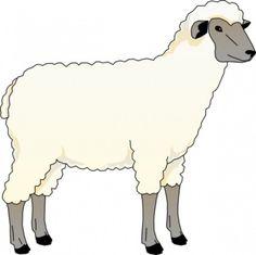 sheep-sheep-17