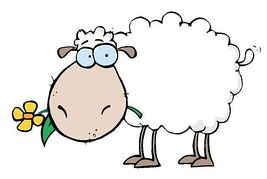Sheep clipart and illustration .