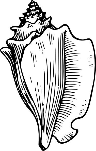 Shell Clip Art Black and White | Conch L-Shell Clip Art Black and White | Conch Large Snail clip art-0